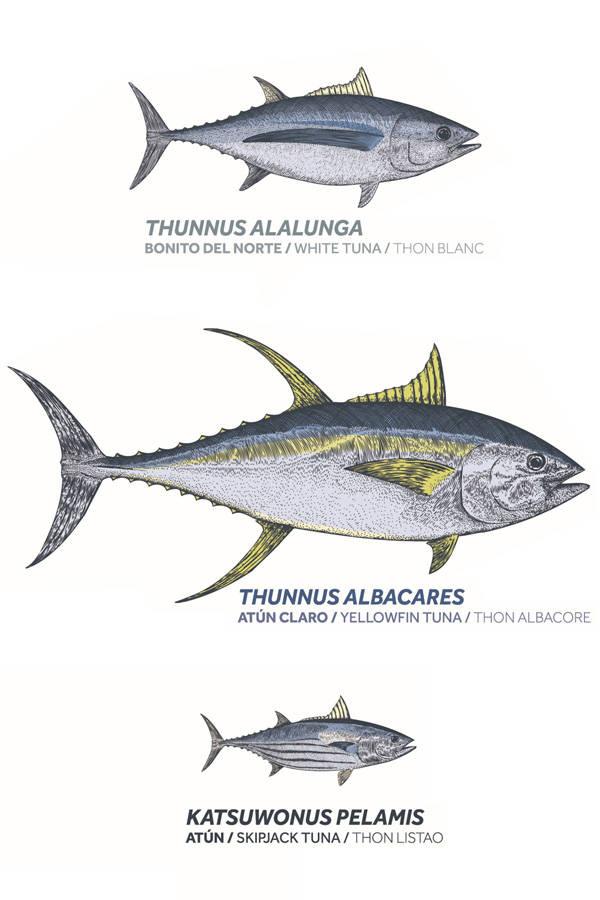 diferencia entre bonito y atún